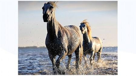 Simbología de los caballos en los sueños