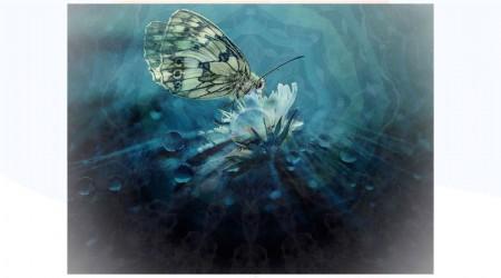 Alma y espíritu de los seres vivos