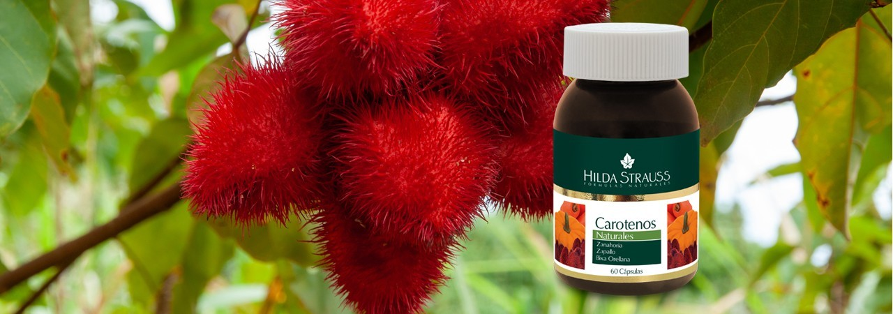 Potentes antioxidantes que estimulan la respuesta inmunológica