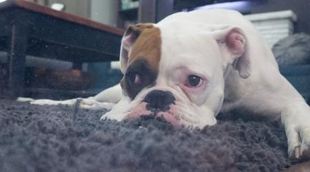 ¿Tapetes con «olor a perro»?