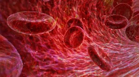 La sangre: una maravilla de la ingeniería humana