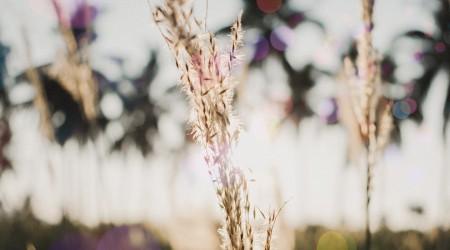 Figuras en campos de cereales